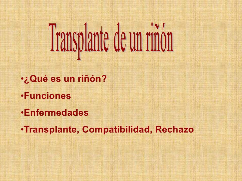 ¿Qué es un riñón? Funciones Enfermedades Transplante, Compatibilidad, Rechazo