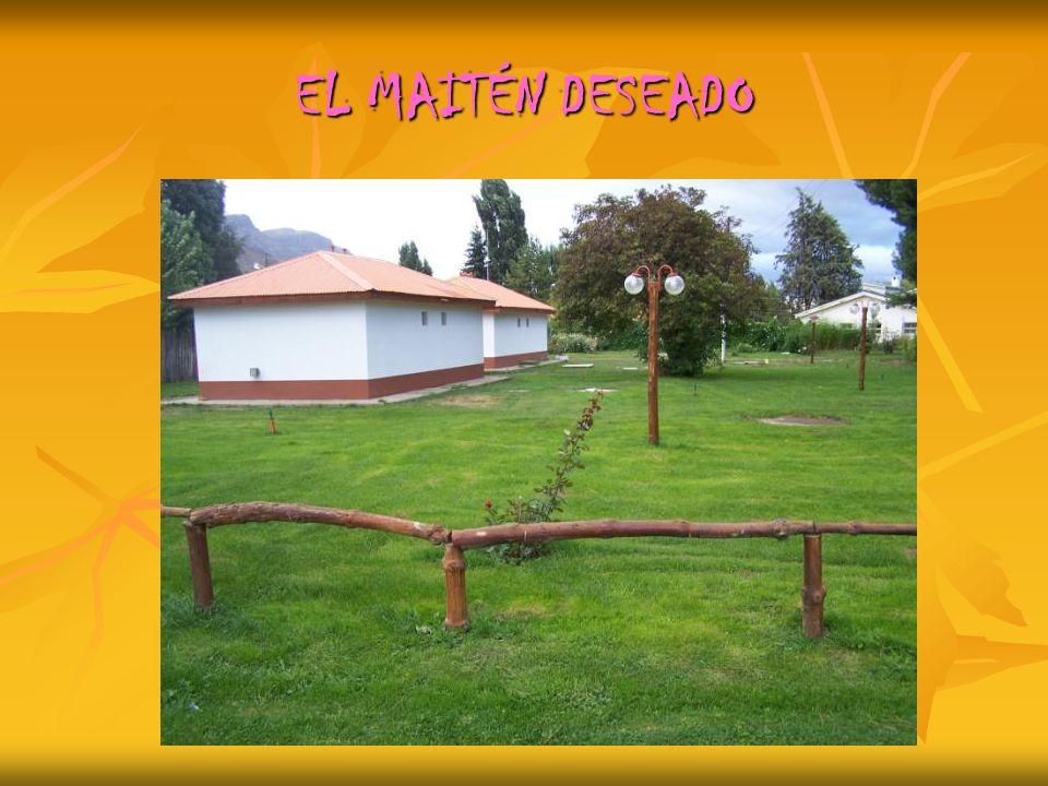 EL MAITÉN DESEADO