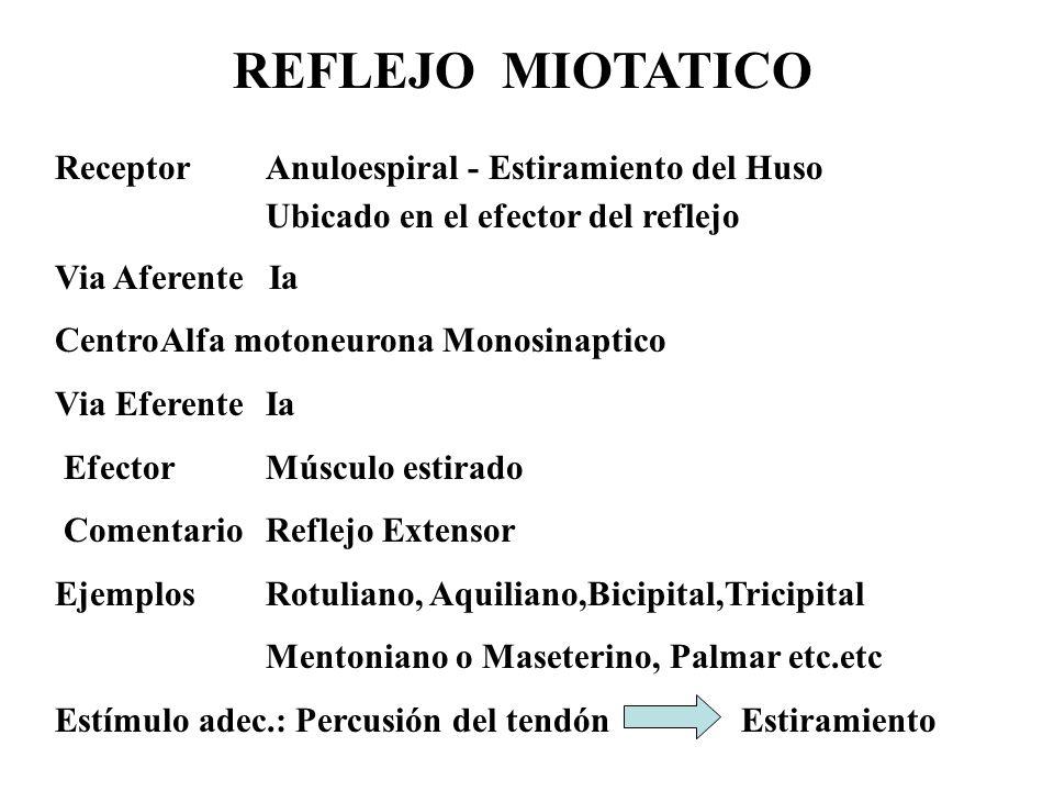 REFLEJO MIOTATICO ReceptorAnuloespiral - Estiramiento del Huso Ubicado en el efector del reflejo Via Aferente Ia CentroAlfa motoneurona Monosinaptico