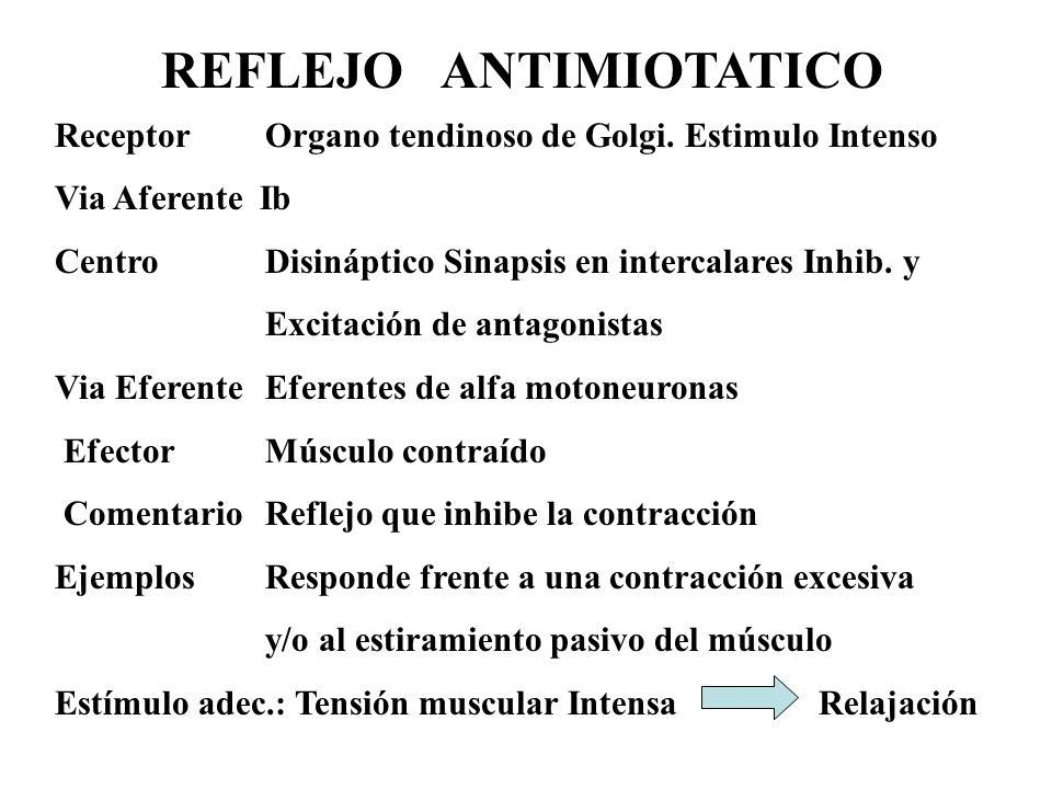 REFLEJO ANTIMIOTATICO ReceptorOrgano tendinoso de Golgi. Estimulo Intenso Via Aferente Ib Centro Disináptico Sinapsis en intercalares Inhib. y Excitac