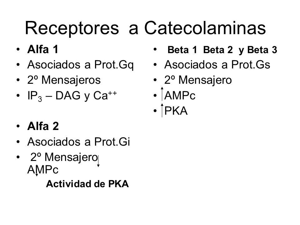 Receptores a Catecolaminas Alfa 1 Asociados a Prot.Gq 2º Mensajeros IP 3 – DAG y Ca ++ Alfa 2 Asociados a Prot.Gi 2º Mensajero AMPc Actividad de PKA B