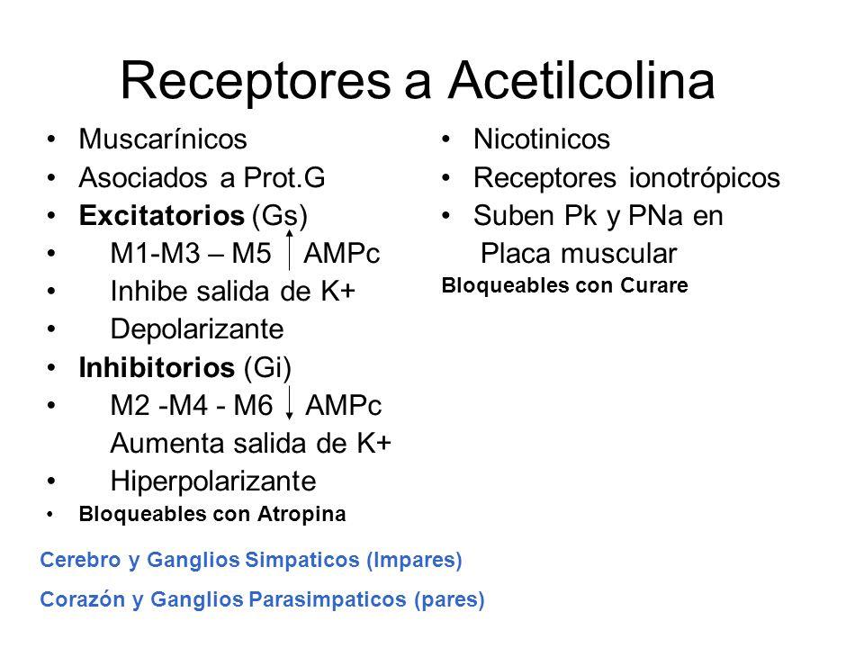 Receptores a Acetilcolina Muscarínicos Asociados a Prot.G Excitatorios (Gs) M1-M3 – M5 AMPc Inhibe salida de K+ Depolarizante Inhibitorios (Gi) M2 -M4