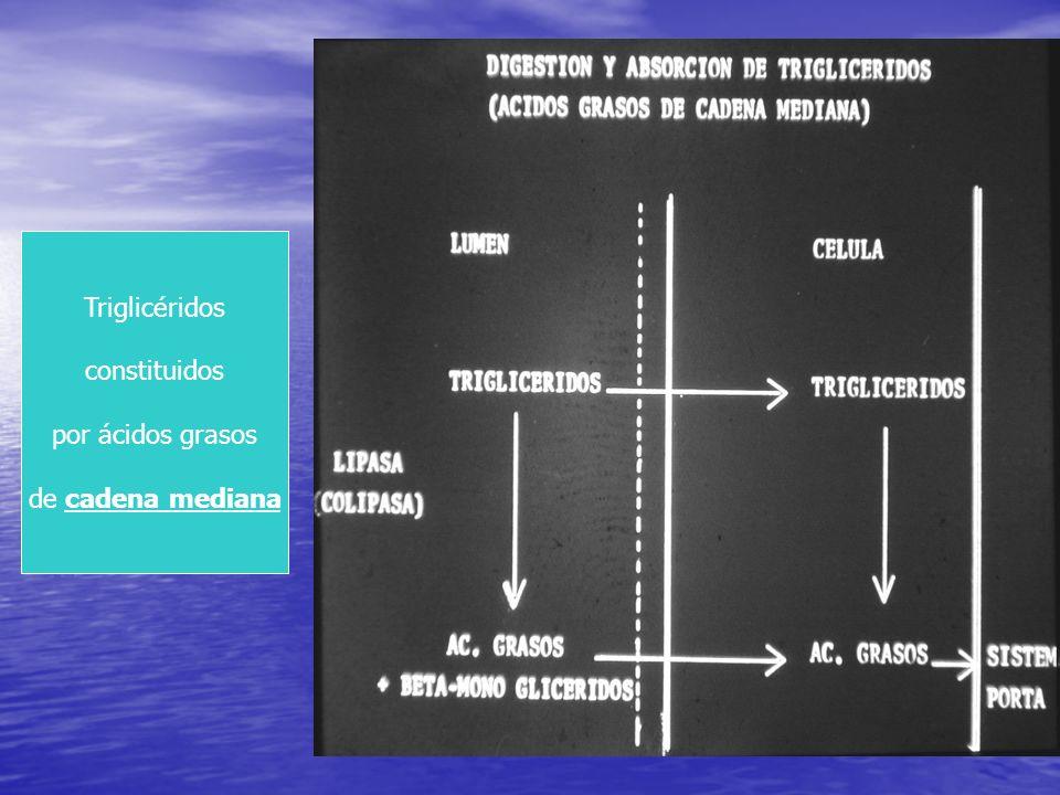 Triglicéridos constituidos por ácidos grasos de cadena mediana