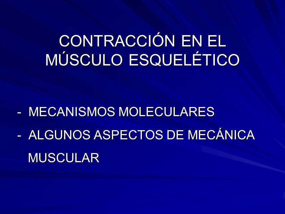 CONTRACCIÓN EN EL MÚSCULO ESQUELÉTICO - MECANISMOS MOLECULARES - ALGUNOS ASPECTOS DE MECÁNICA MUSCULAR