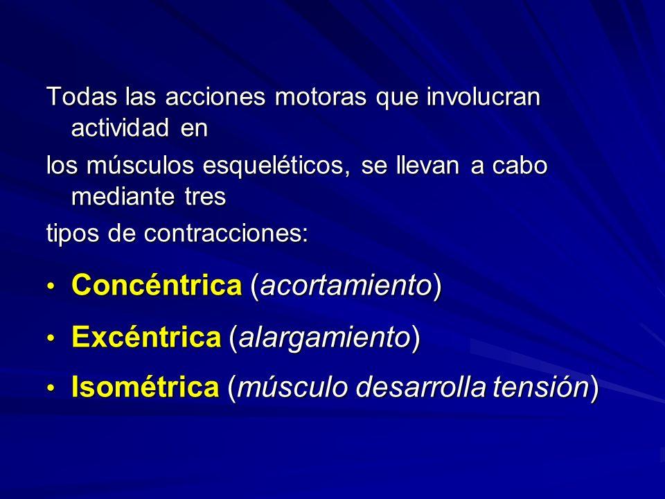 Todas las acciones motoras que involucran actividad en los músculos esqueléticos, se llevan a cabo mediante tres tipos de contracciones: Concéntrica (