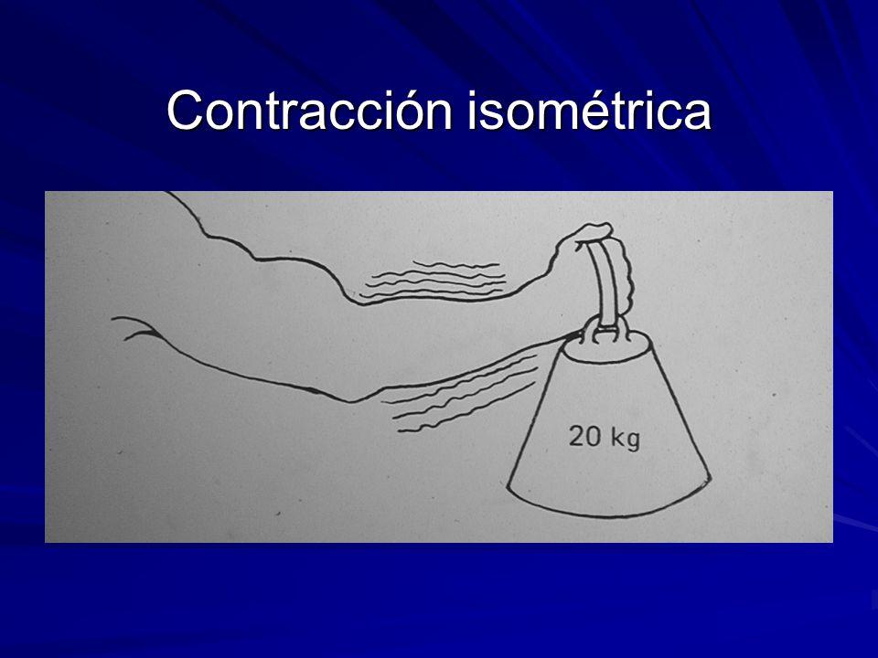 Contracción isométrica