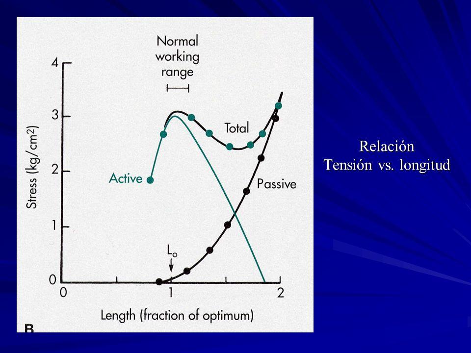 Relación Tensión vs. longitud