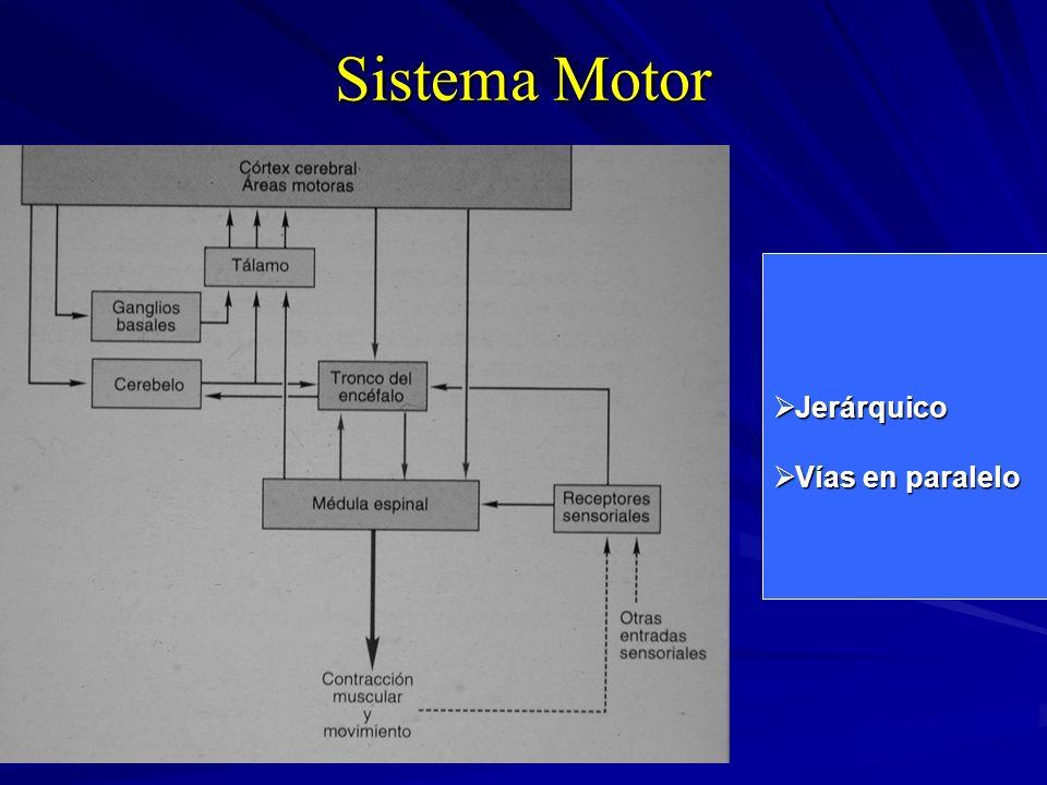 Sistema Motor Jerárquico Jerárquico Vías en paralelo Vías en paralelo