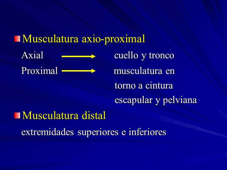 Musculatura axio-proximal Axial cuello y tronco Axial cuello y tronco Proximal musculatura en Proximal musculatura en torno a cintura torno a cintura