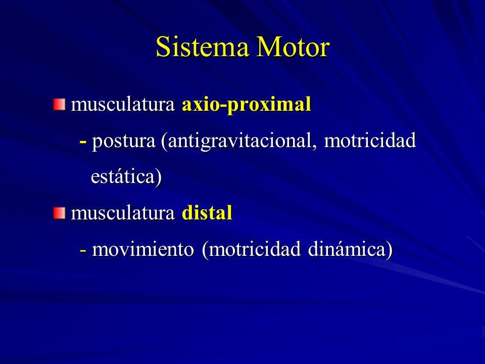 Sistema Motor musculatura axio-proximal - postura (antigravitacional, motricidad - postura (antigravitacional, motricidad estática) estática) musculat