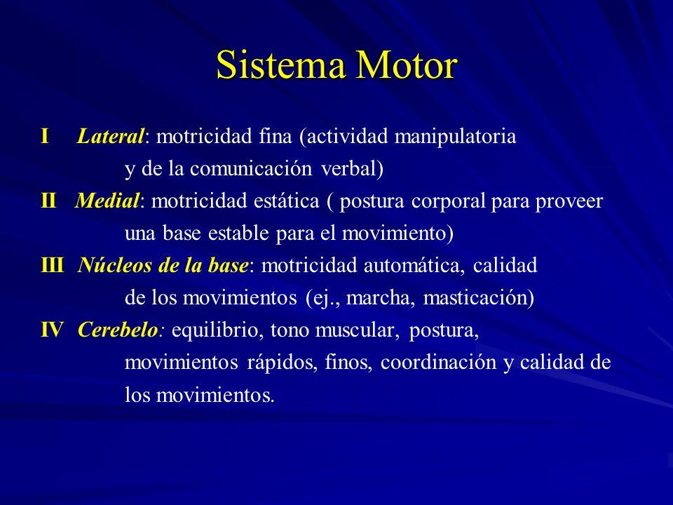 Sistema Motor I Lateral: motricidad fina (actividad manipulatoria y de la comunicación verbal) II Medial: motricidad estática ( postura corporal para