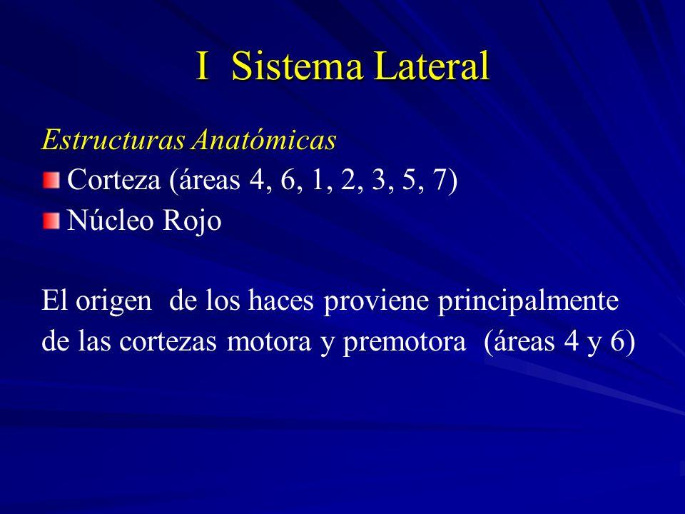 I Sistema Lateral Estructuras Anatómicas Corteza (áreas 4, 6, 1, 2, 3, 5, 7) Núcleo Rojo El origen de los haces proviene principalmente de las corteza