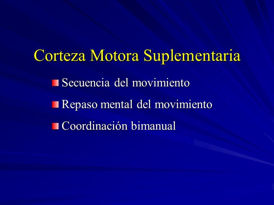 Corteza Motora Suplementaria Secuencia del movimiento Repaso mental del movimiento Coordinación bimanual