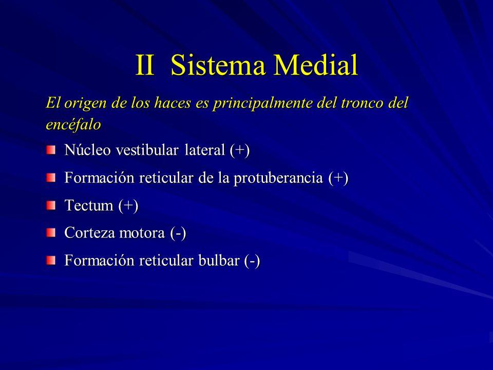 II Sistema Medial El origen de los haces es principalmente del tronco del encéfalo Núcleo vestibular lateral (+) Formación reticular de la protuberanc
