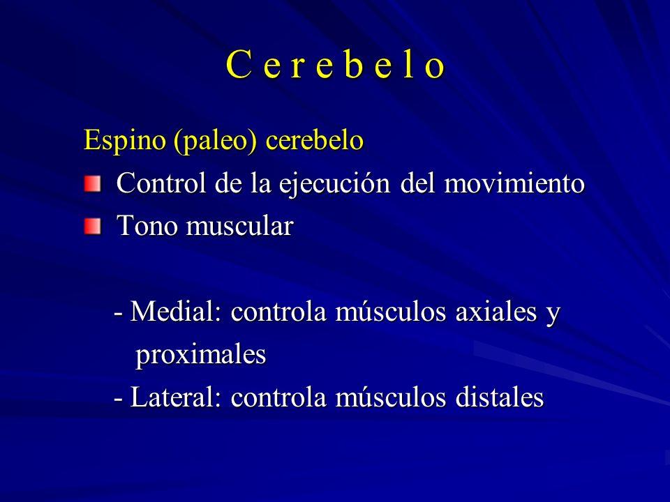 C e r e b e l o Espino (paleo) cerebelo Control de la ejecución del movimiento Control de la ejecución del movimiento Tono muscular Tono muscular - Me