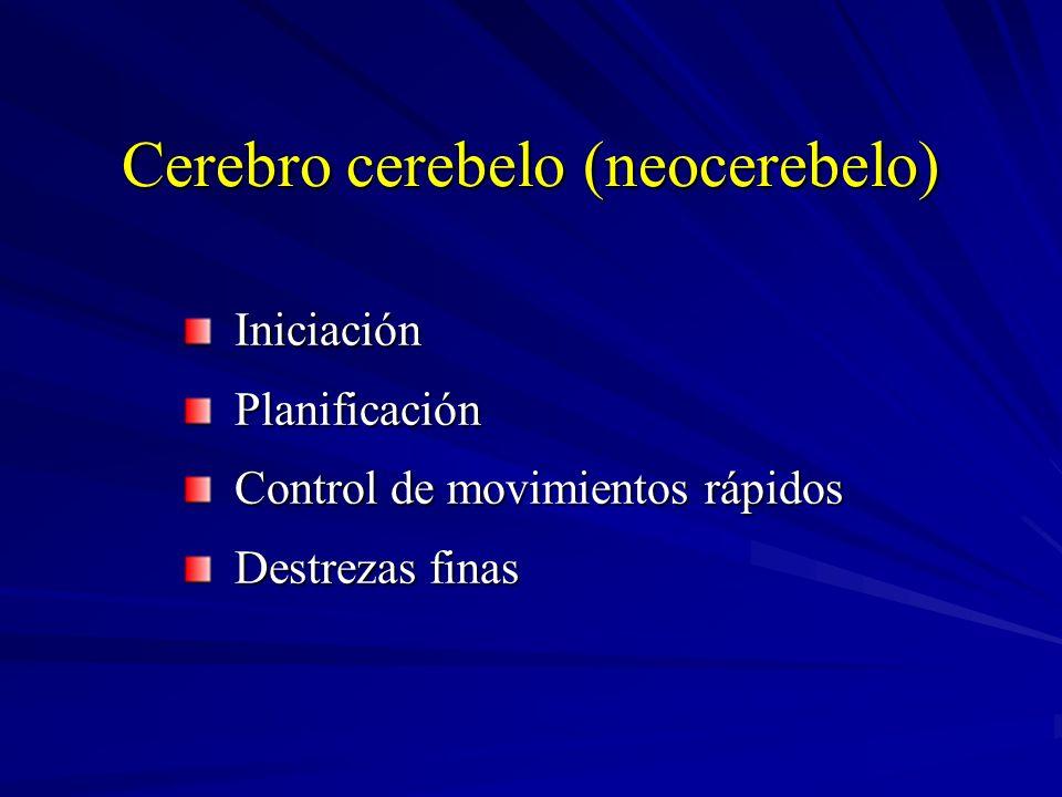 Cerebro cerebelo (neocerebelo) Iniciación Iniciación Planificación Planificación Control de movimientos rápidos Control de movimientos rápidos Destrez
