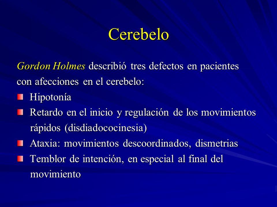 Cerebelo Gordon Holmes describió tres defectos en pacientes con afecciones en el cerebelo: Hipotonía Hipotonía Retardo en el inicio y regulación de lo