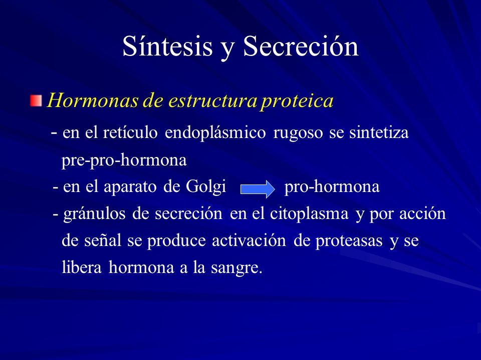 Síntesis y Secreción Hormonas de estructura proteica - en el retículo endoplásmico rugoso se sintetiza pre-pro-hormona - en el aparato de Golgi pro-ho