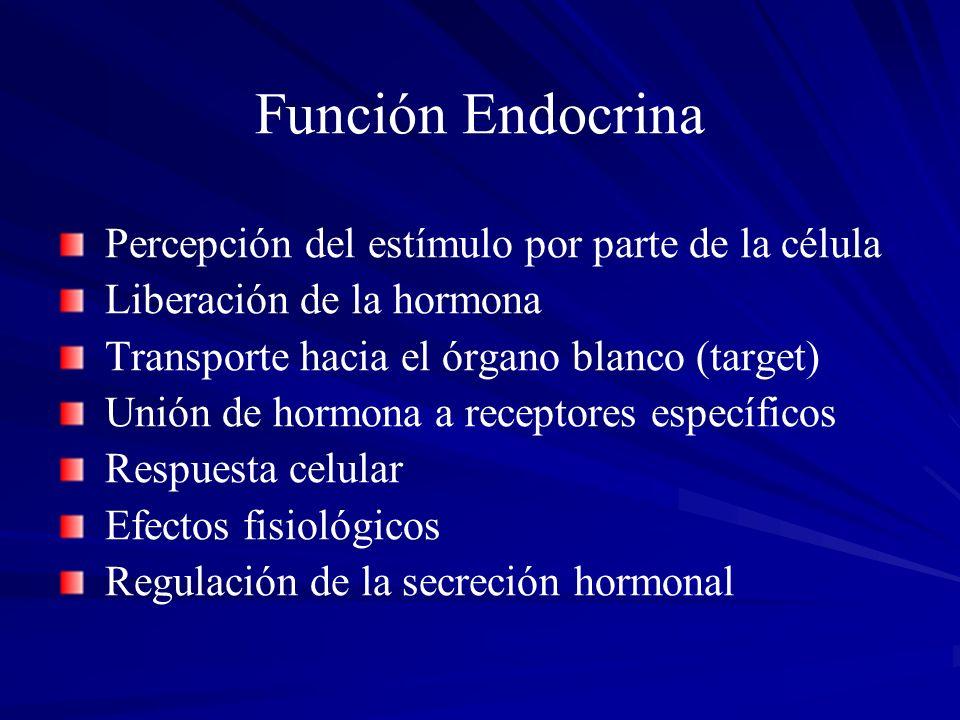 Función Endocrina Percepción del estímulo por parte de la célula Liberación de la hormona Transporte hacia el órgano blanco (target) Unión de hormona