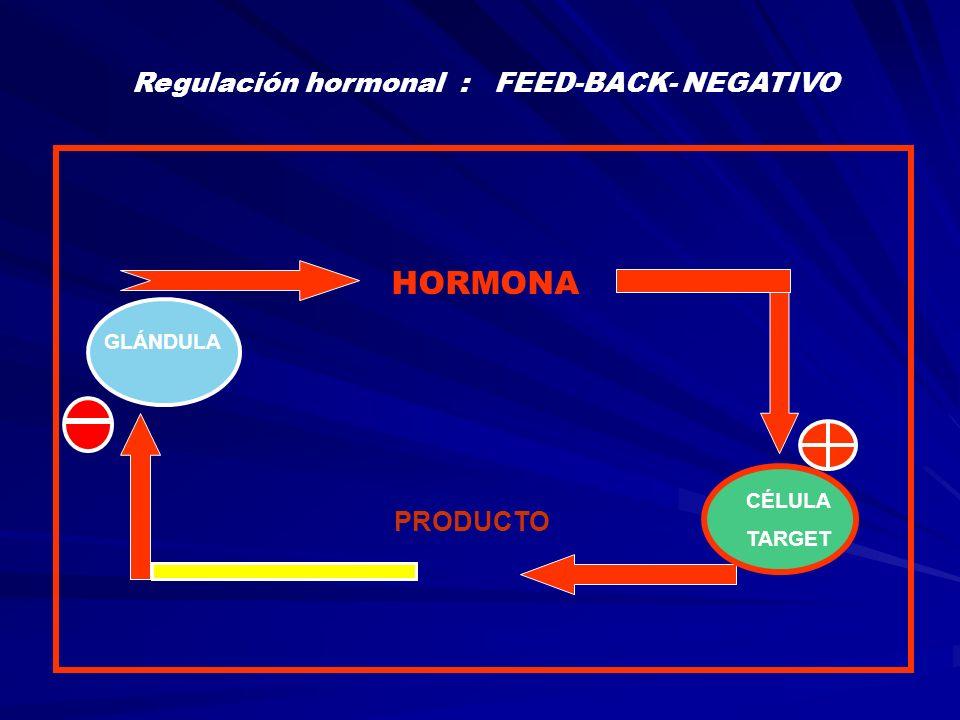 HORMONA CÉLULA TARGET GLÁNDULA Regulación hormonal : FEED-BACK- POSITIVO PRODUCTO