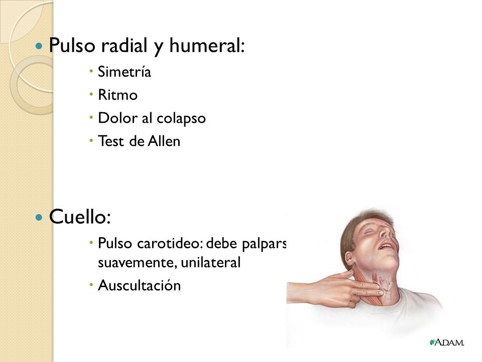 Pulso radial y humeral: Simetría Ritmo Dolor al colapso Test de Allen Cuello: Pulso carotideo: debe palparse suavemente, unilateral Auscultación