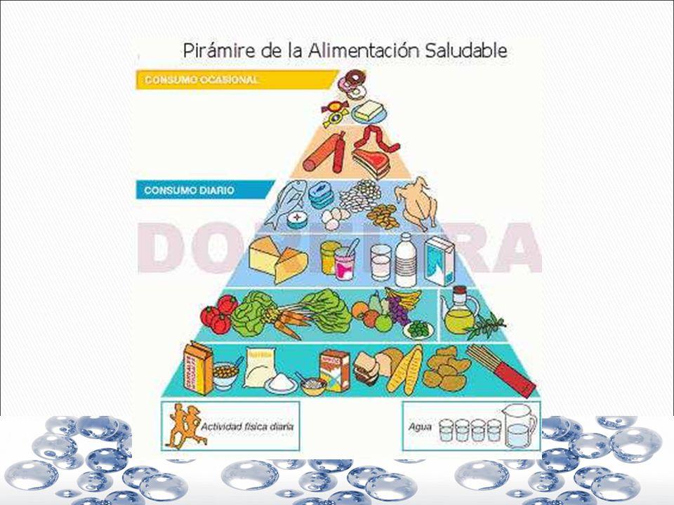 Raíces y tubérculos Son órganos de almacenamiento vegetal.