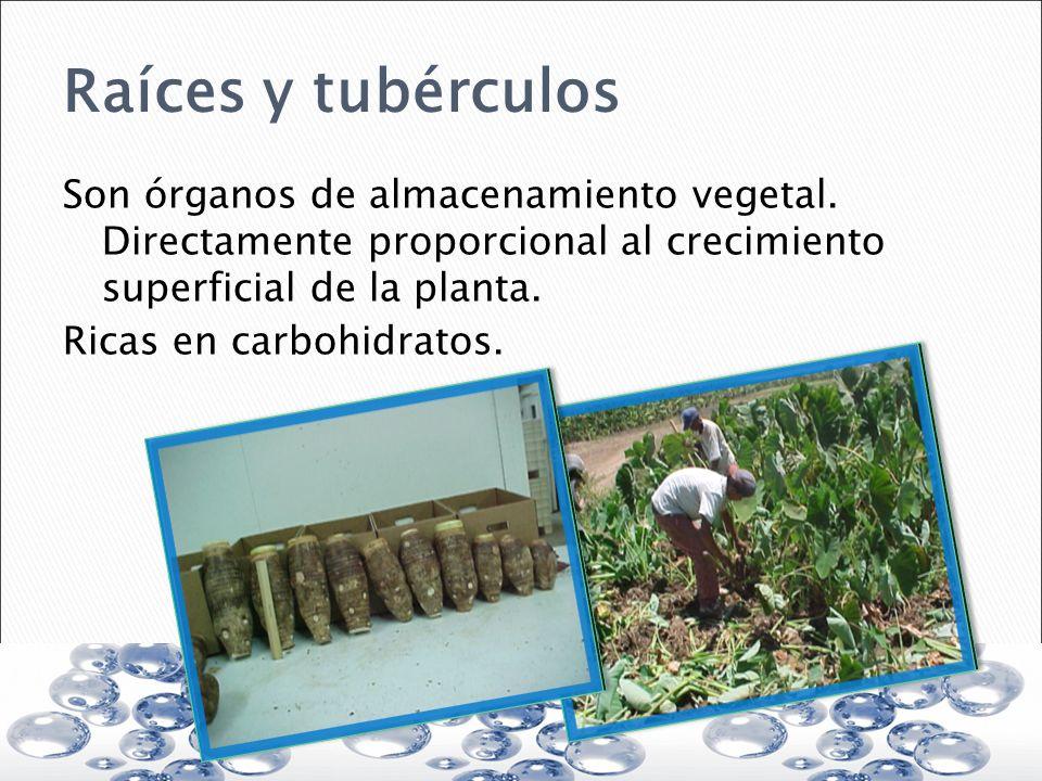 Raíces y tubérculos Son órganos de almacenamiento vegetal. Directamente proporcional al crecimiento superficial de la planta. Ricas en carbohidratos.