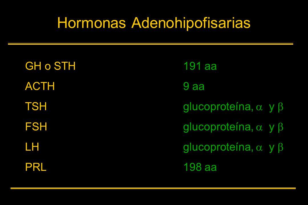 Condiciones de deficiencia de IGF-I Síndrome de Laron Ausencia de receptores para la GH Déficit de IGF- I Enanismo y falta desarrollo GH normal e incluso alta