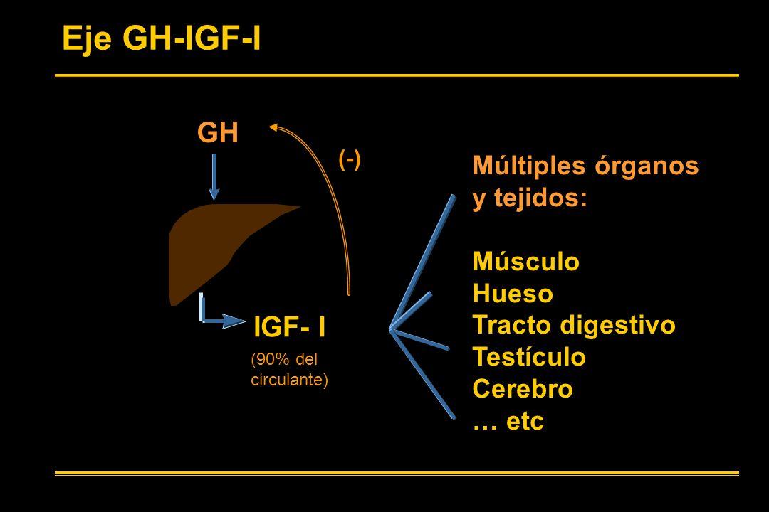 GH IGF- I (-) Eje GH-IGF-I (90% del circulante) Múltiples órganos y tejidos: Músculo Hueso Tracto digestivo Testículo Cerebro … etc