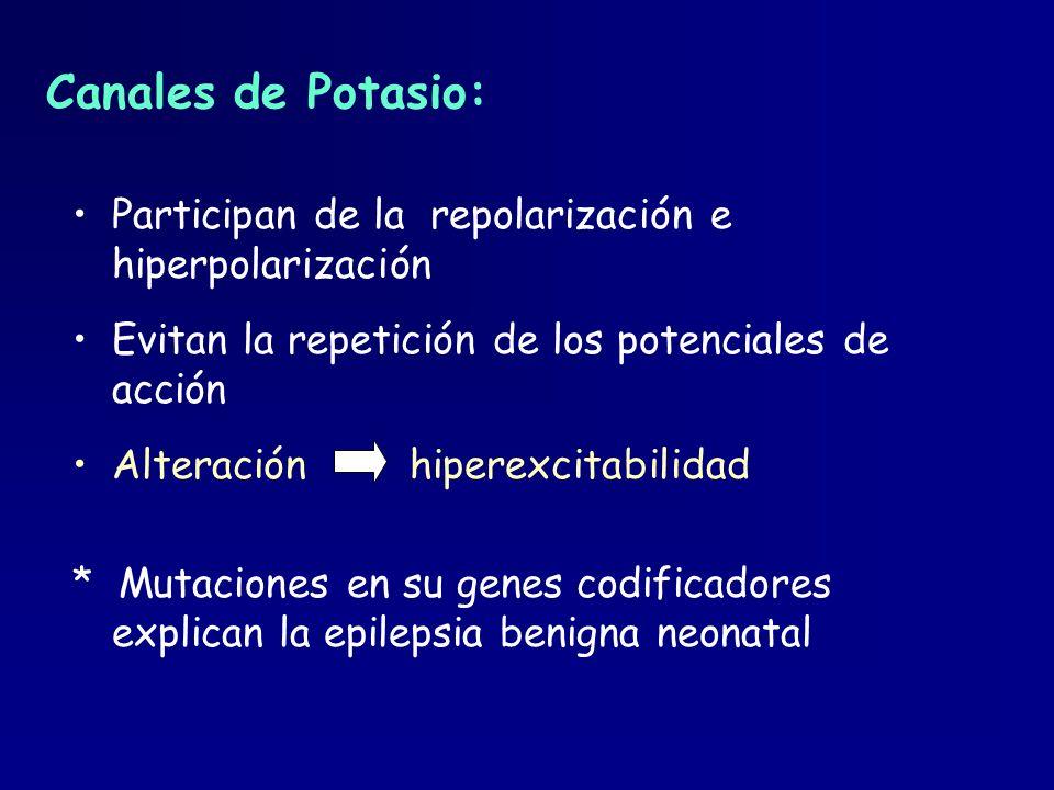 Canales de Potasio: Participan de la repolarización e hiperpolarización Evitan la repetición de los potenciales de acción Alteración hiperexcitabilida