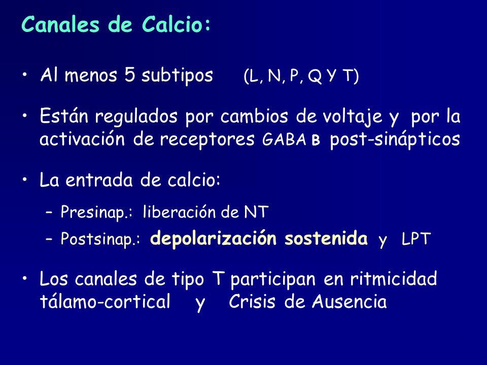 Canales de Calcio: Al menos 5 subtipos (L, N, P, Q Y T) Están regulados por cambios de voltaje y por la activación de receptores GABA B post-sináptico