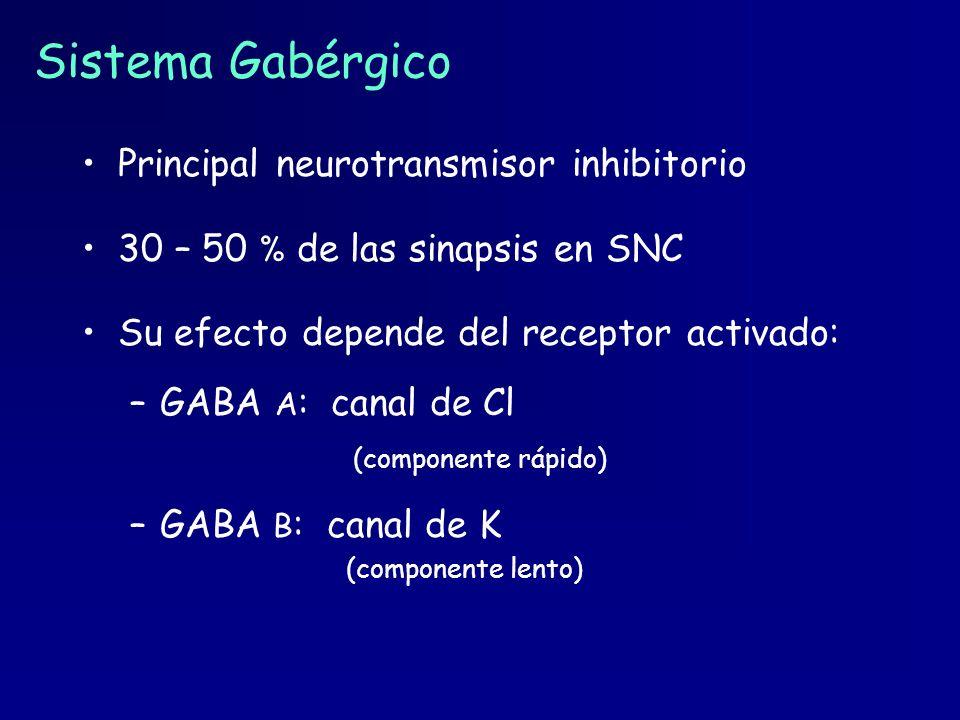 Sistema Gabérgico Principal neurotransmisor inhibitorio 30 – 50 % de las sinapsis en SNC Su efecto depende del receptor activado: –GABA A : canal de C