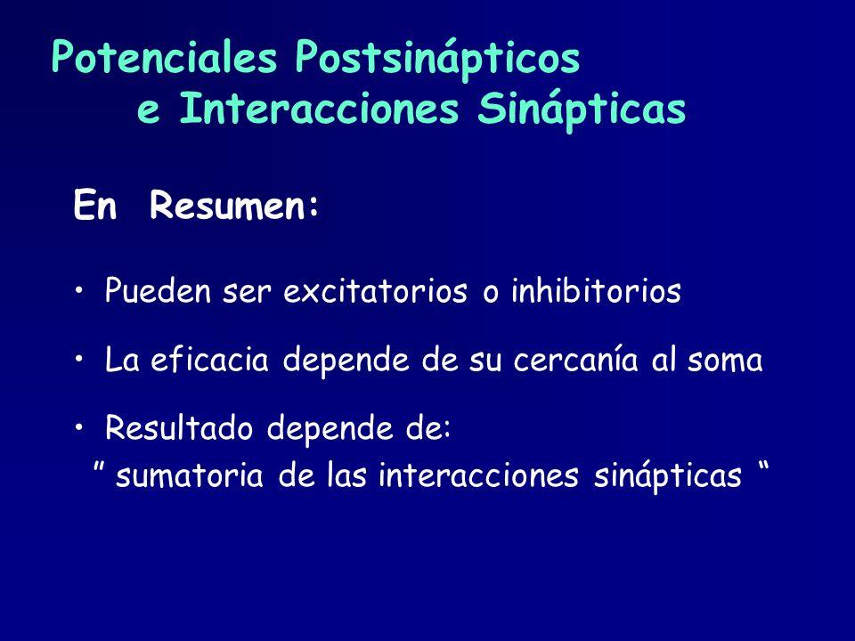 Potenciales Postsinápticos e Interacciones Sinápticas En Resumen: Pueden ser excitatorios o inhibitorios La eficacia depende de su cercanía al soma Re