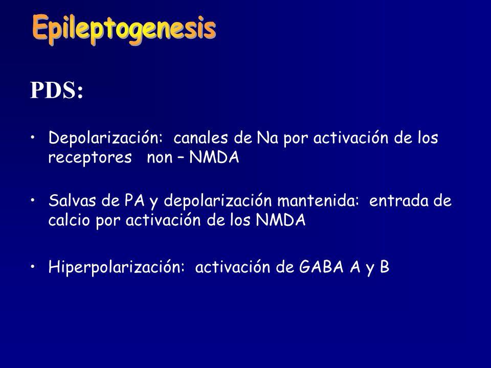 PDS: Depolarización: canales de Na por activación de los receptores non – NMDA Salvas de PA y depolarización mantenida: entrada de calcio por activaci