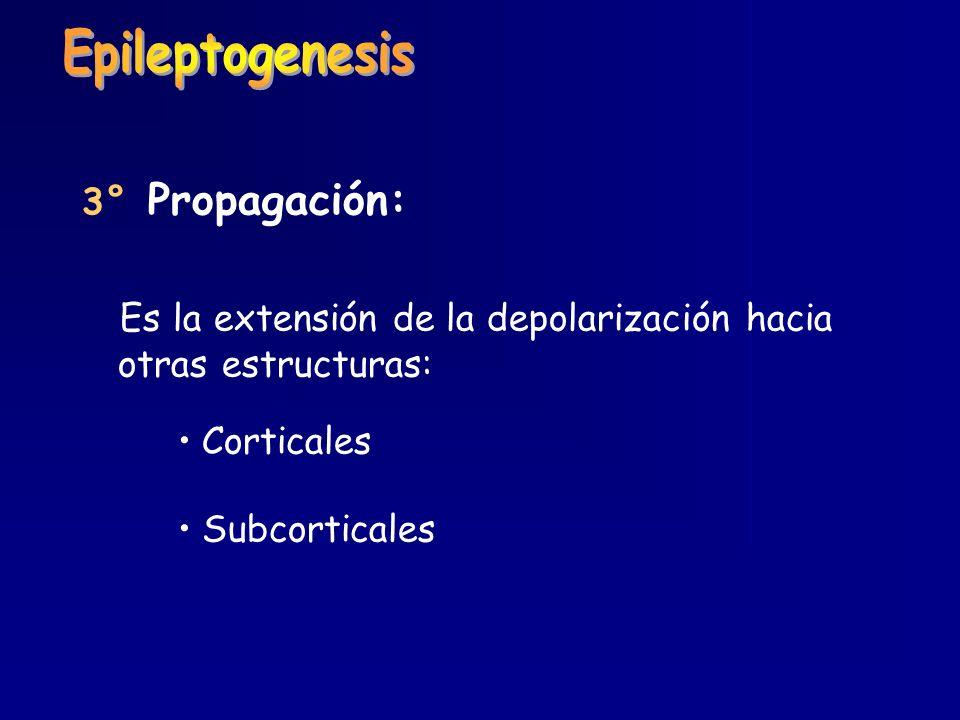 3° Propagación: Es la extensión de la depolarización hacia otras estructuras: Corticales Subcorticales