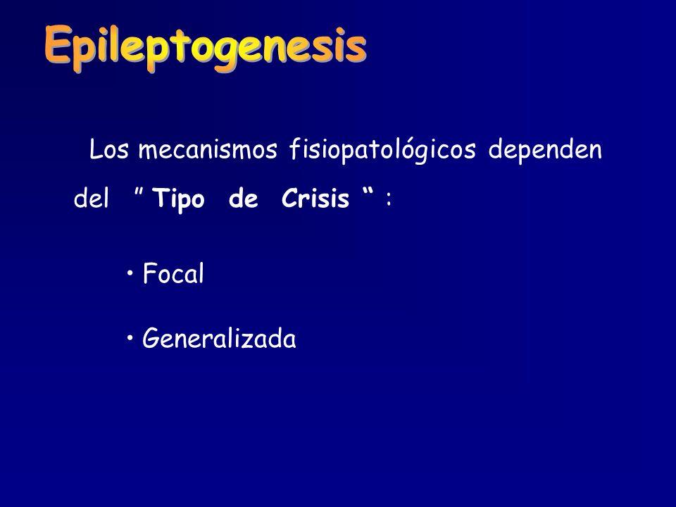 Los mecanismos fisiopatológicos dependen del Tipo de Crisis : Focal Generalizada