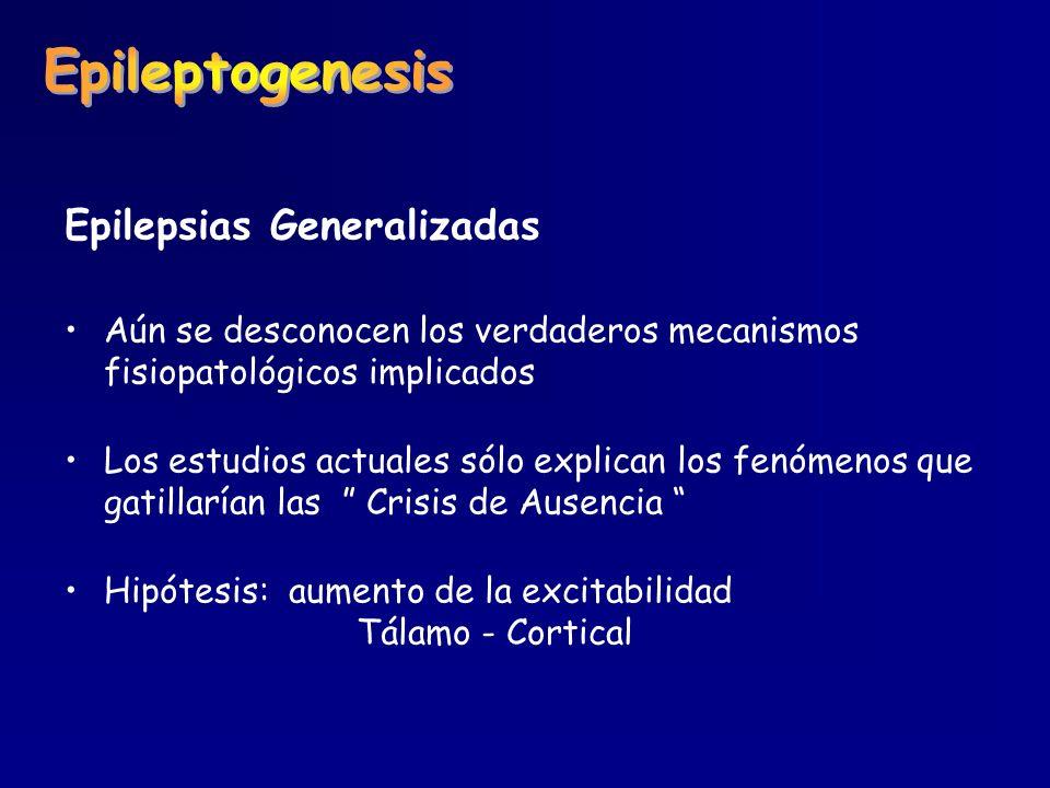 Epilepsias Generalizadas Aún se desconocen los verdaderos mecanismos fisiopatológicos implicados Los estudios actuales sólo explican los fenómenos que