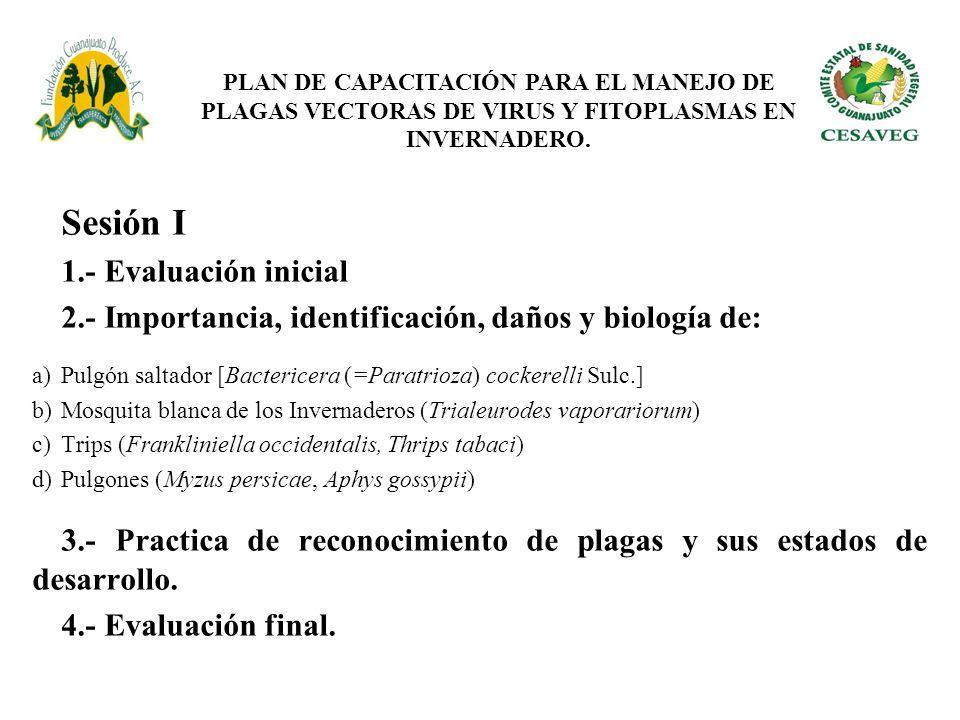 Sesión I 1.- Evaluación inicial 2.- Importancia, identificación, daños y biología de: a)Pulgón saltador [Bactericera (=Paratrioza) cockerelli Sulc.] b