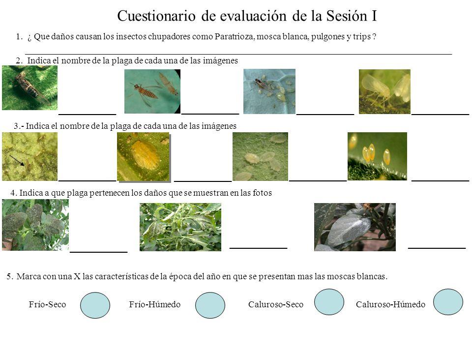 Cuestionario de evaluación de la Sesión I 1. ¿ Que daños causan los insectos chupadores como Paratrioza, mosca blanca, pulgones y trips ? ____________