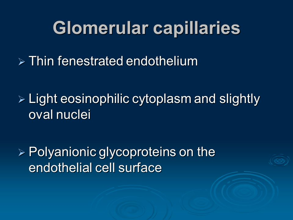 Glomerular capillaries Thin fenestrated endothelium Thin fenestrated endothelium Light eosinophilic cytoplasm and slightly oval nuclei Light eosinophi