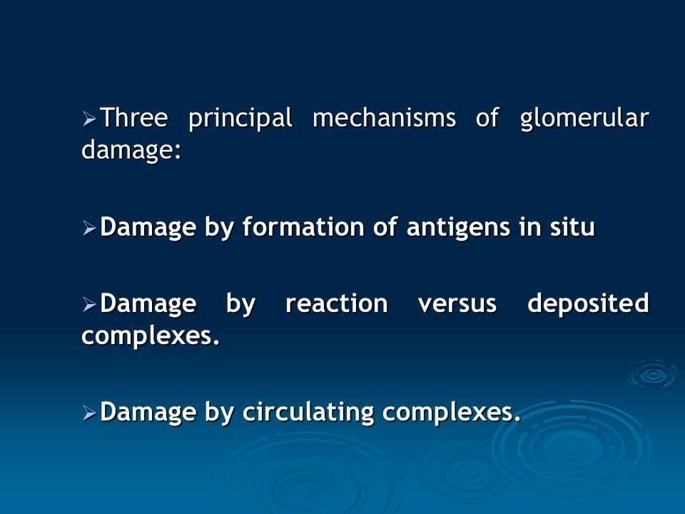 Three principal mechanisms of glomerular damage: Three principal mechanisms of glomerular damage: Damage by formation of antigens in situ Damage by fo