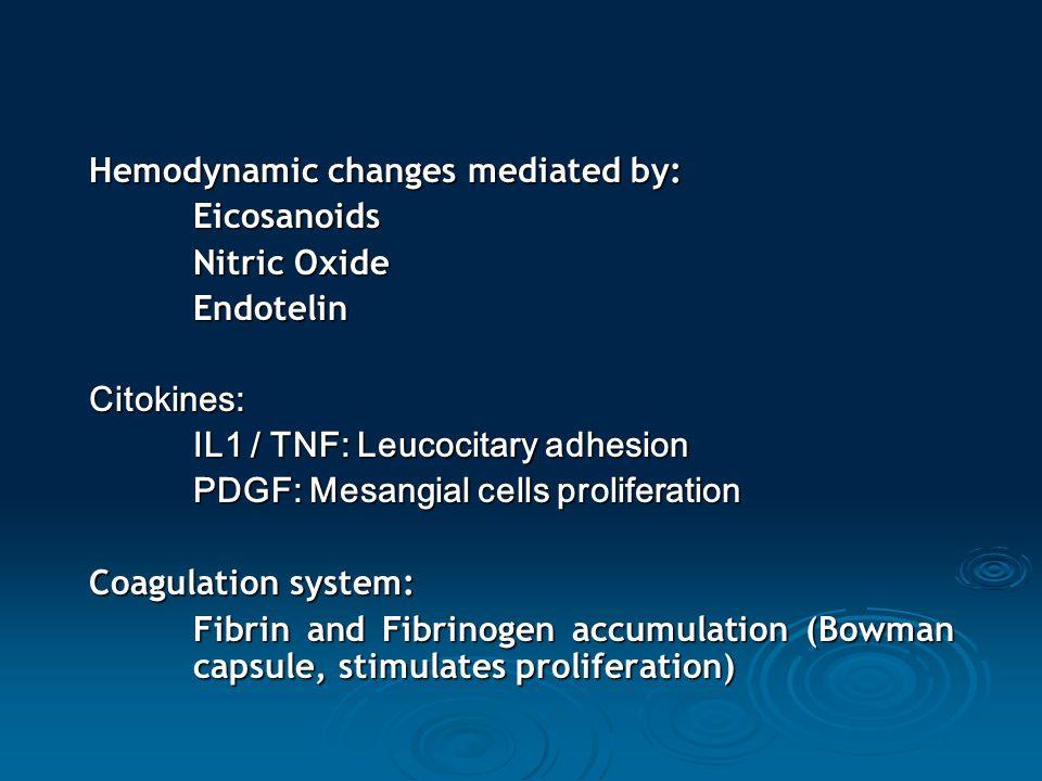Hemodynamic changes mediated by: Eicosanoids Nitric Oxide EndotelinCitokines: IL1 / TNF: Leucocitary adhesion PDGF: Mesangial cells proliferation Coag