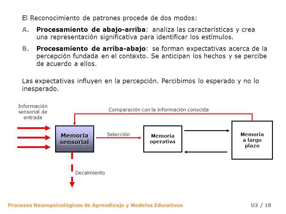 Procesos Neuropsicológicos de Aprendizaje y Modelos Educativos U2 / 18 Memoria operativa Memoria a largo plazo Información sensorial de entrada Memori