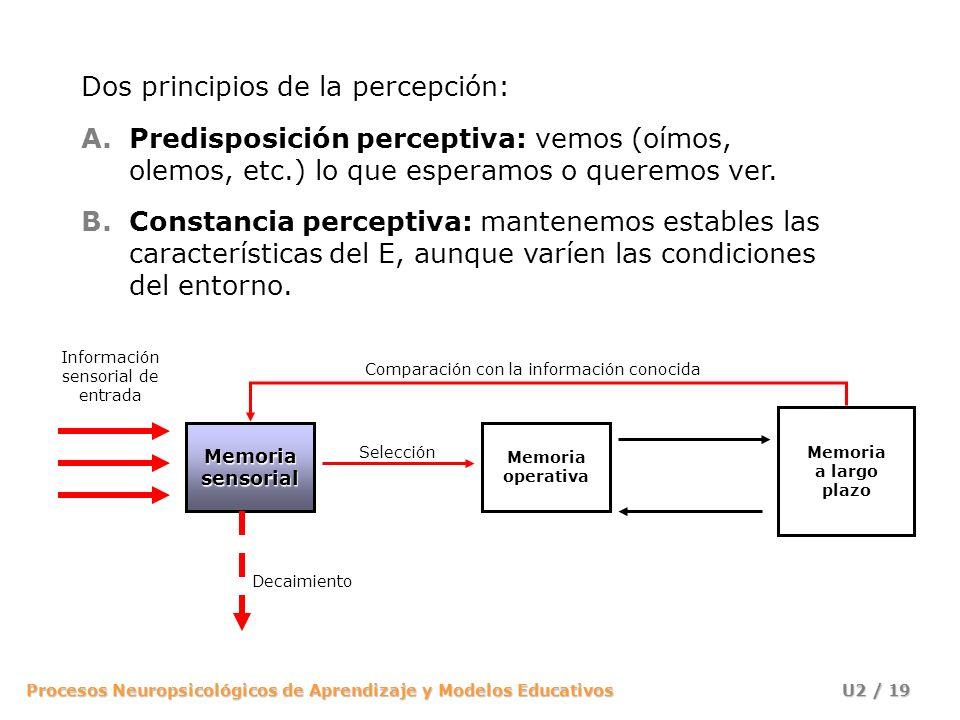 Procesos Neuropsicológicos de Aprendizaje y Modelos Educativos U2 / 19 Memoria operativa Memoria a largo plazo Información sensorial de entrada Memori