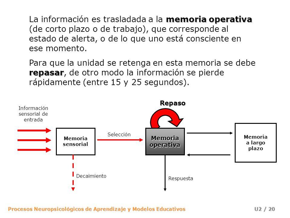 Procesos Neuropsicológicos de Aprendizaje y Modelos Educativos U2 / 20 memoria operativa La información es trasladada a la memoria operativa (de corto