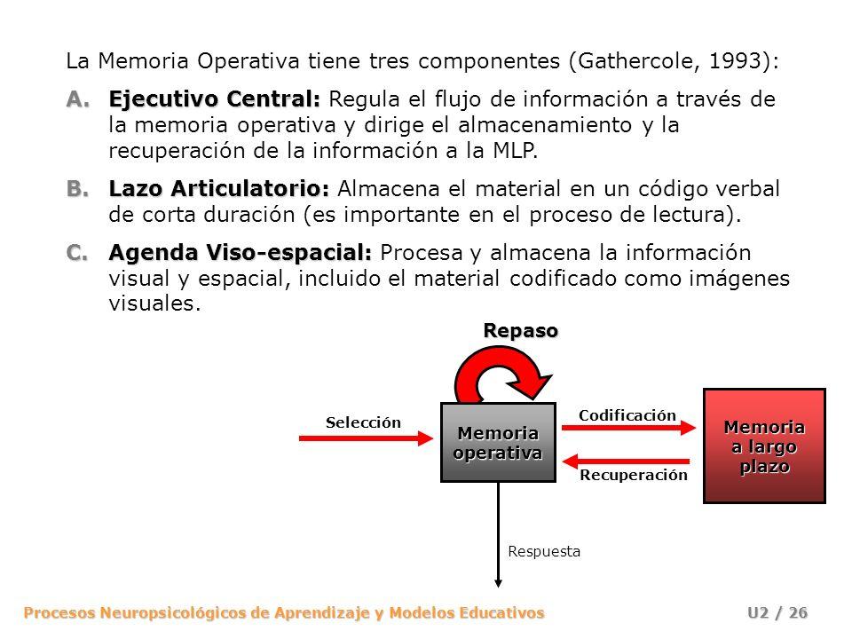 Procesos Neuropsicológicos de Aprendizaje y Modelos Educativos U2 / 26 La Memoria Operativa tiene tres componentes (Gathercole, 1993): A.Ejecutivo Cen