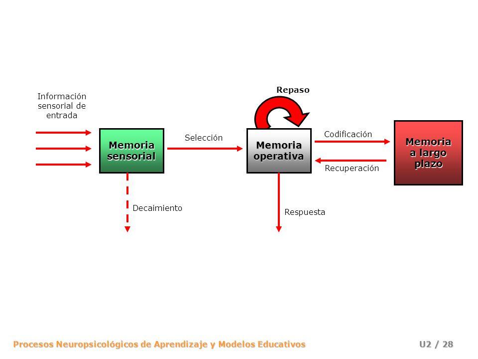 Procesos Neuropsicológicos de Aprendizaje y Modelos Educativos U2 / 28 Información sensorial de entrada MemoriasensorialMemoriaoperativa Memoria a lar