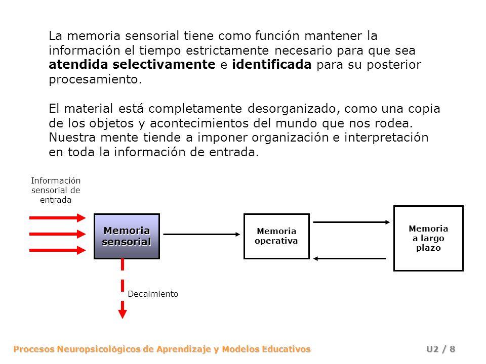 Procesos Neuropsicológicos de Aprendizaje y Modelos Educativos U2 / 19 Memoria operativa Memoria a largo plazo Información sensorial de entrada Memoriasensorial Decaimiento Comparación con la información conocida Selección Dos principios de la percepción: A.Predisposición perceptiva: vemos (oímos, olemos, etc.) lo que esperamos o queremos ver.