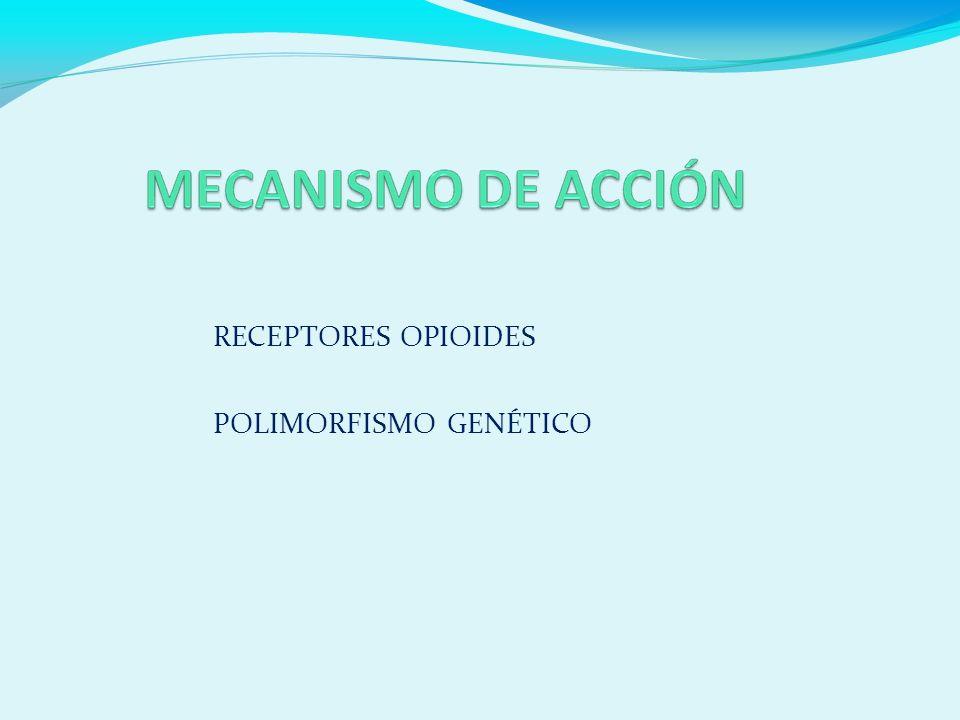 RECEPTORES OPIOIDES POLIMORFISMO GENÉTICO