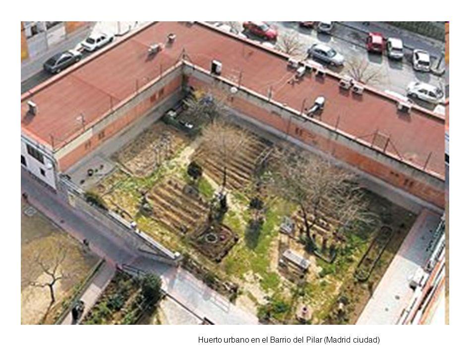 Huerto urbano en el Barrio del Pilar (Madrid ciudad)